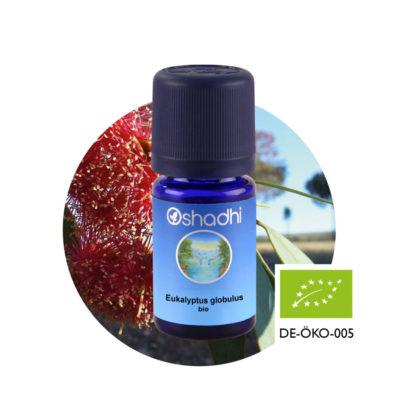 Ätherisches Öl Eukalyptus globulus bio