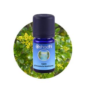 Ätherisches Öl Aglaia (Chinesische Reisblume)
