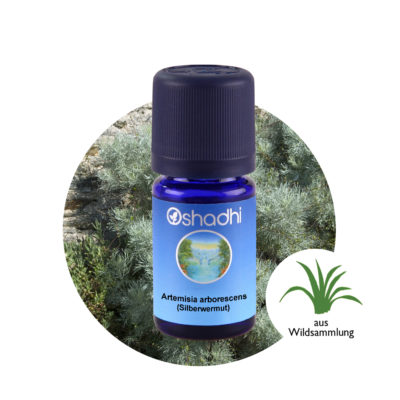 Ätherisches Öl Artemisia arborescens (Silberwermut)