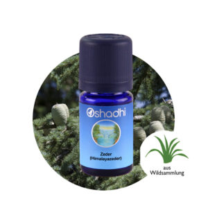 Ätherisches Öl Zeder (Himalayazeder)