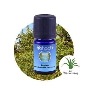 Ätherisches Öl Zypresse (Mexikanische Zypresse)
